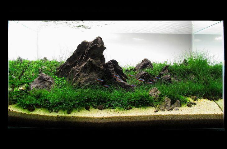 aquascape design – aquaticscapers contest winner | aquajaya