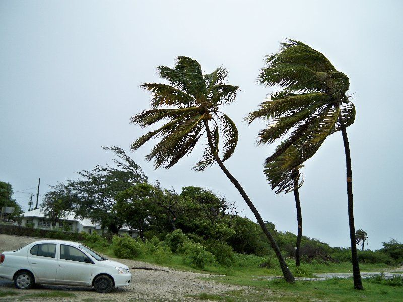 Windy Weather (With images) | Windy weather, Windy day, Nature