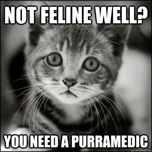 24d699e9959b9fa85acd7c2690f7dae1 sad kitten memes image memes at relatably com cat memes,Cute Sick Memes