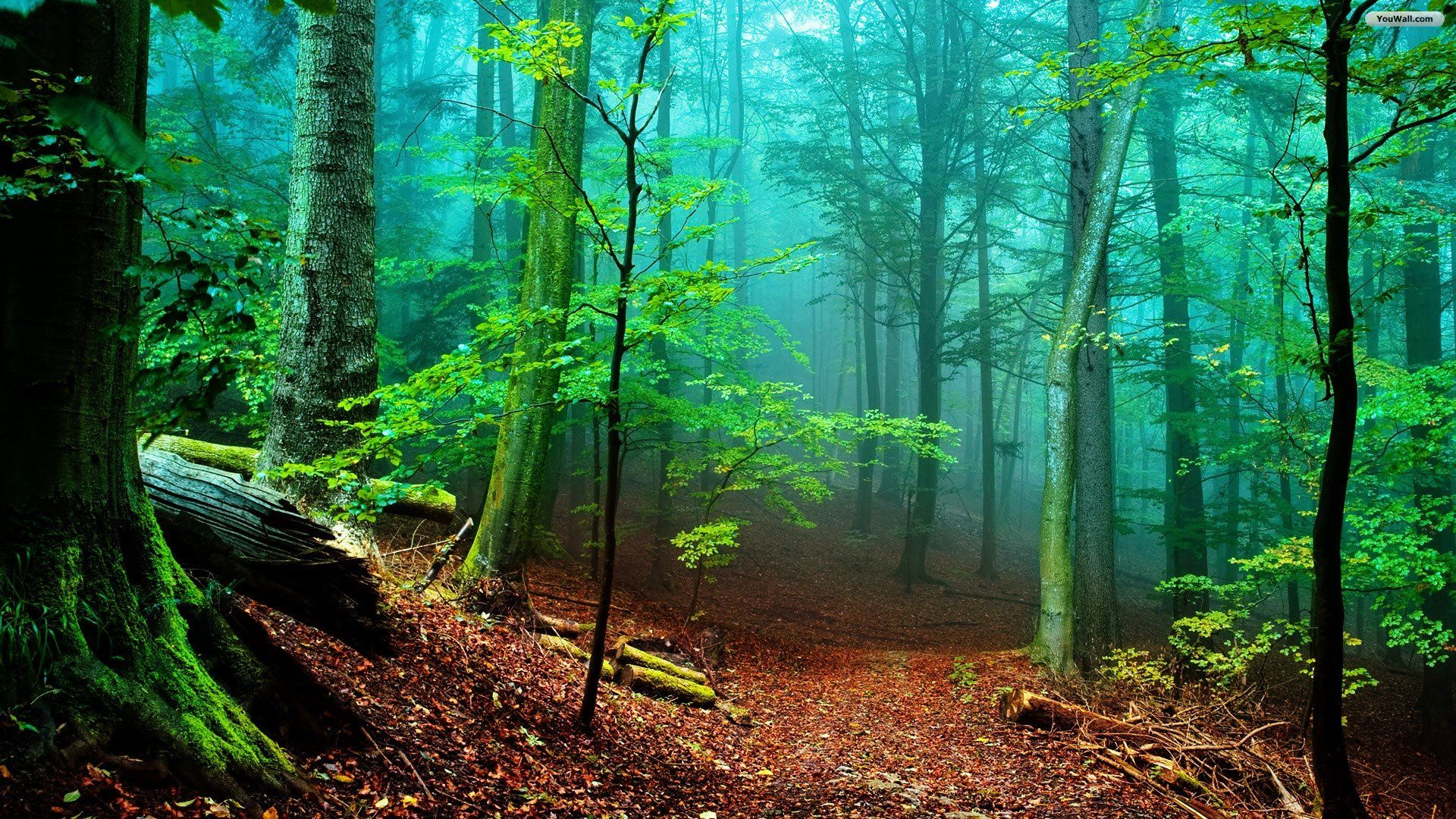 Beautiful Forest HD Wallpaper Widescreen