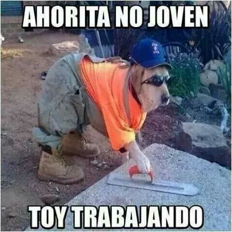 Meme De Perro Funny Dog Memes Funny Pictures Funny Animal Photos