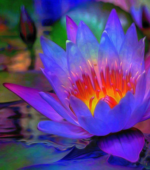 Blue Lotus Art Print by Fli Art