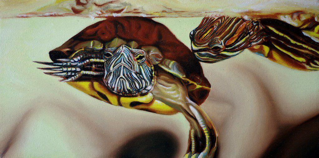 Homemade aquatic turtle food recipe aquatic turtles pet