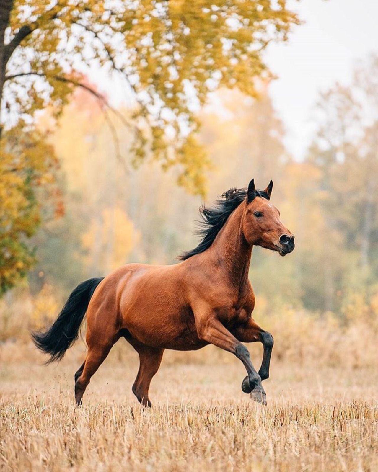 animals horse running free - photo #25