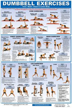 accessories  poster db exercises lowerbody/chest back
