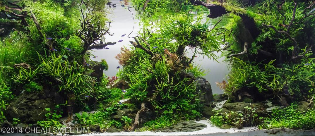 These Aquascapes Will Blow Your Mind These Are The Best Of 2014 And