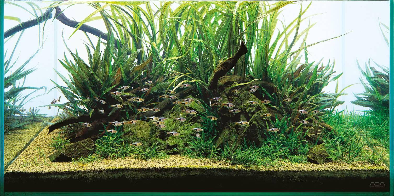 Ada Aqua Soil Malaya And Africana A Piece Of Nature For Your Aquarium Aquascape Planted Aquarium Nature Aquarium