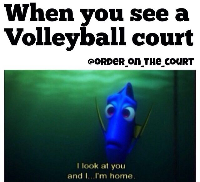 haha truth/ volleyball humor