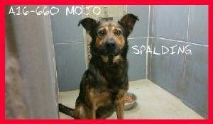 Pin on adopt, pin, share, help save lives!!!