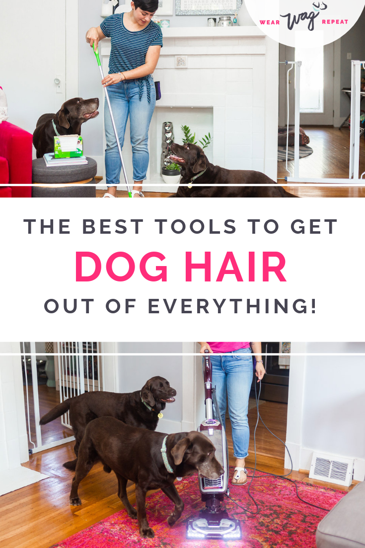 The Best Cleaning Tools To Get Dog Hair Out Of Anything Dog Hair