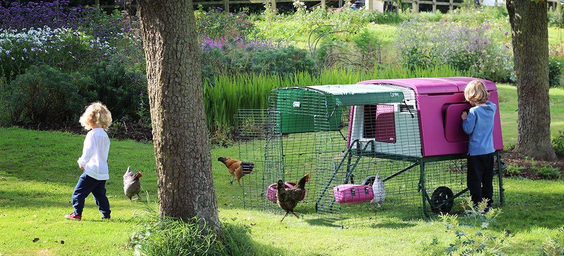 Merveilleux Backyard Chickens