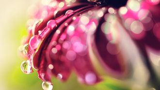 Макро фото цветок и капли