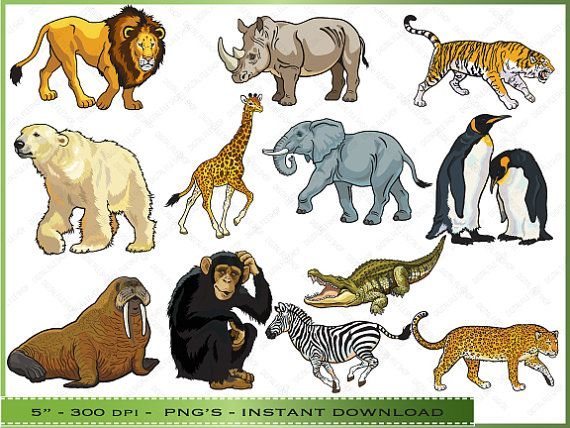 Animal Clipart Clip Art Of Zoo Animals Commercial Use Instant