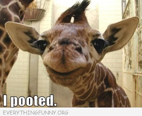 funny giraffe i pooted caption picture