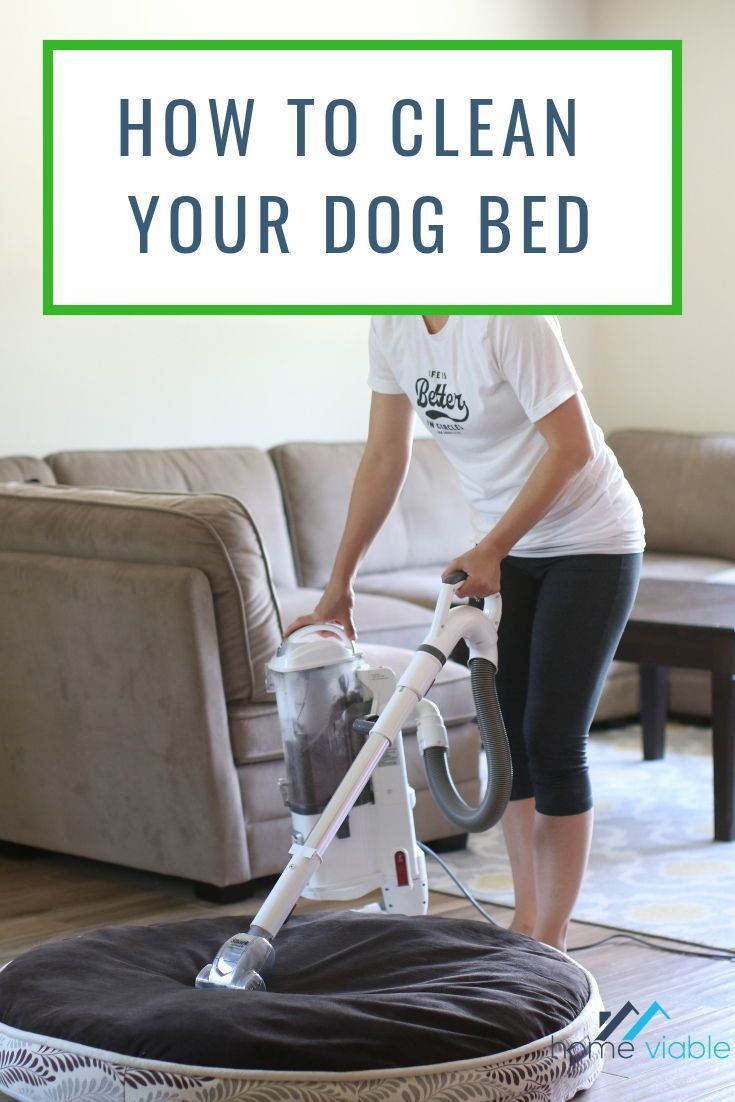 A guide on how to clean your dogs bed wash pet bed pet