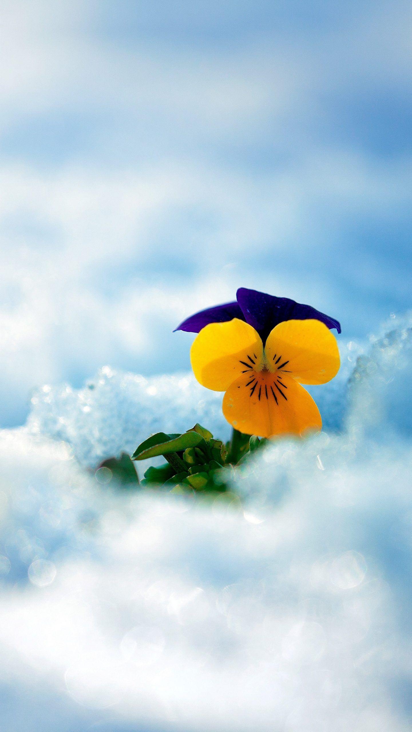 Flower In 2021 Amazing Flowers Flower Drawing Tumblr Yellow Flowers Fantastic yellow flower hd wallpaper