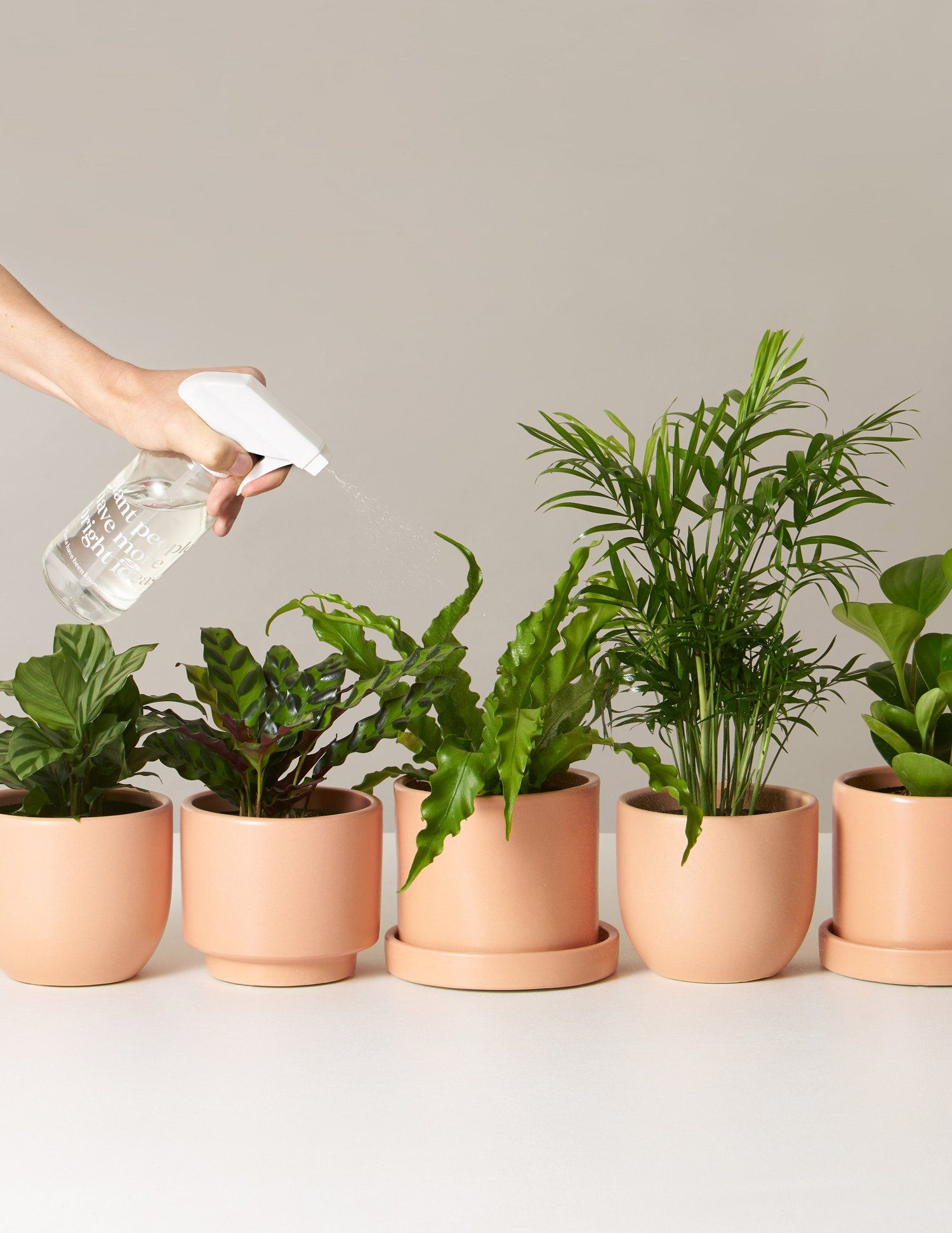 Pet Friendly Plants Monthly Subscription Low Light Plants Easy