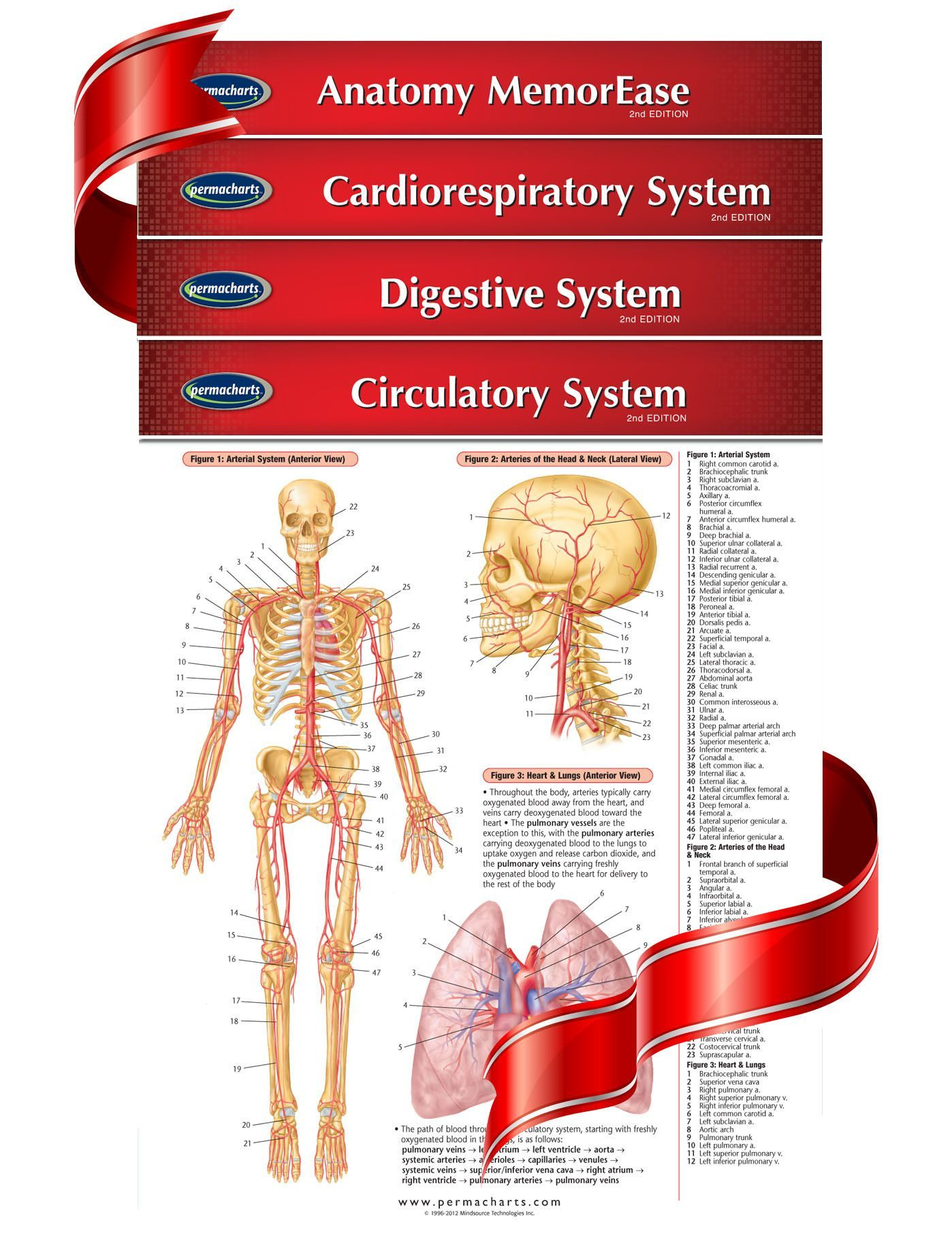 Medical and Anatomy Charts - 4 Chart Quick Reference Guide ...