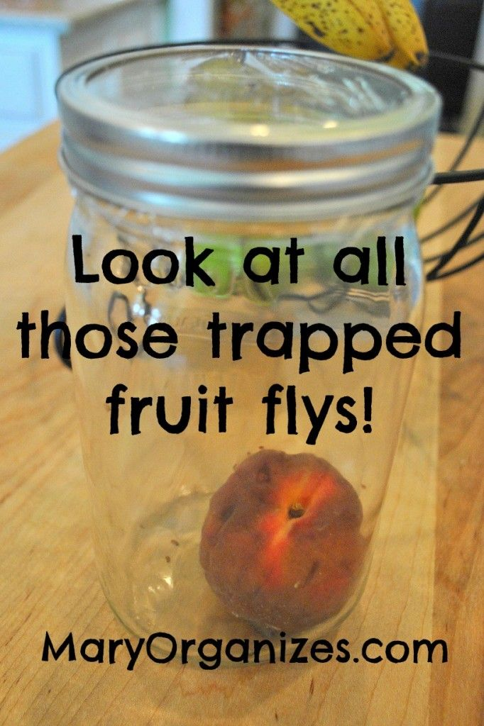 Get Rid Of Fruit Flies For Good | Fly traps and Cleaning