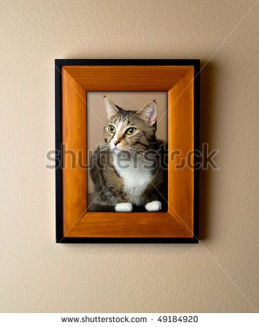 Family Pet Cat Portrait In A Wooden Frame On Wall. Simple Decor ...