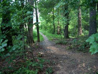 Path through state park