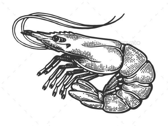 Shrimp Sea Animal Engraving Vector #Sea, #Shrimp, #Animal