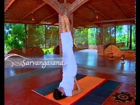 shoulder stand  sarvangasana  the art of living global