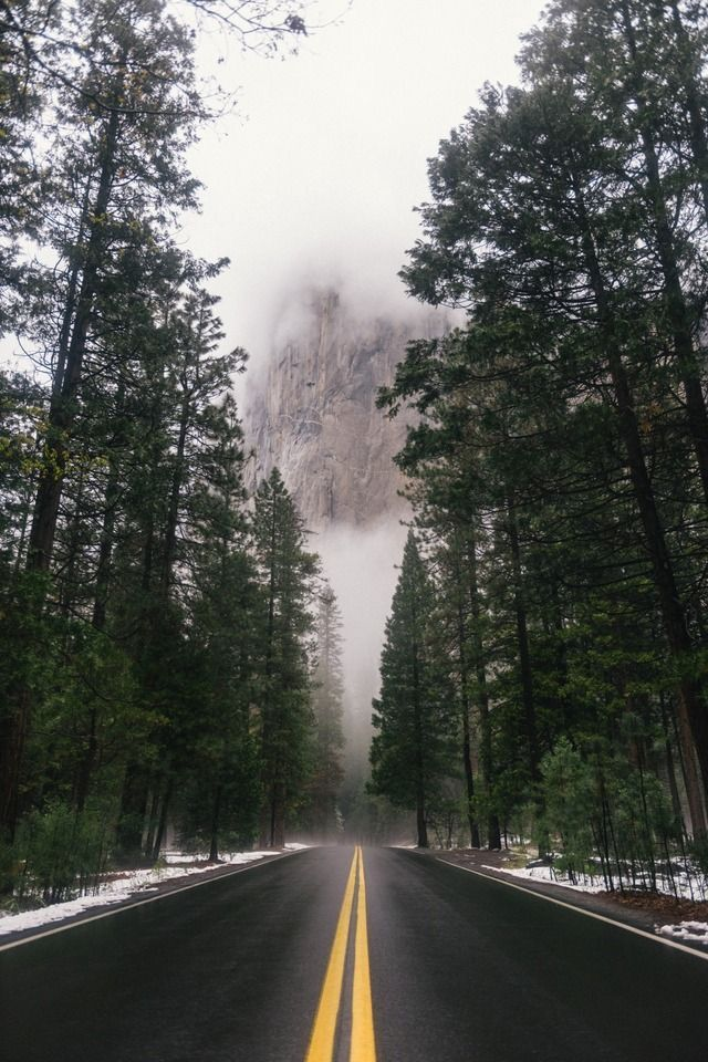 Pine tree road forest iphone wallpaper screensaver - Pine tree wallpaper iphone ...