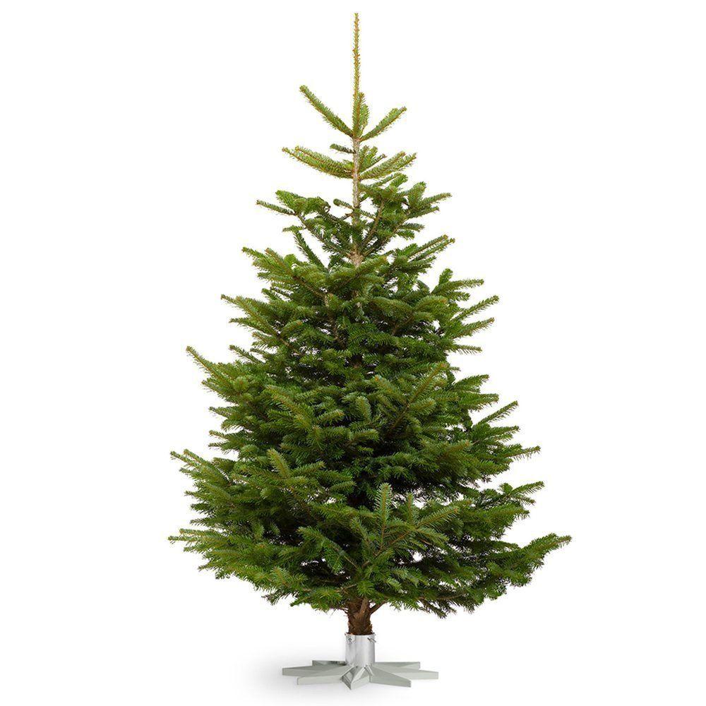 Nordmann Fir - Real Christmas Trees Fresh Cut No Mess Child & Pet ...