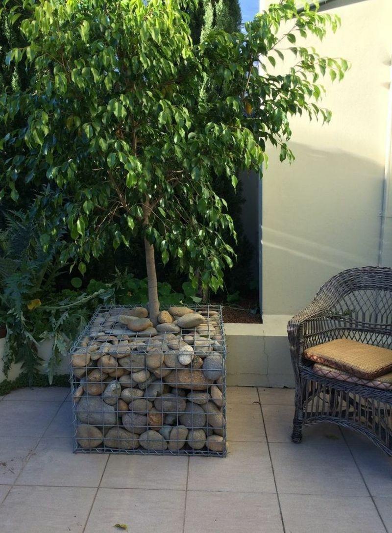 Gabionen Als Deko Im Garten Pflanzkuebel Idee Ficus Terrasse