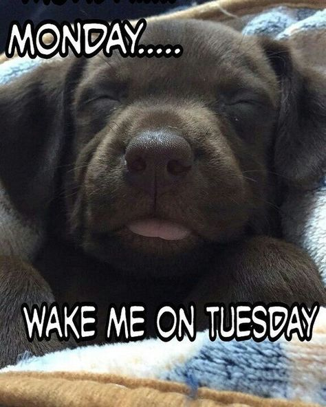 Yes Especially This Monday Being At The Lake All Weekend It Will Be A Tough One Puppies Funny Dog Quotes Lab Puppies