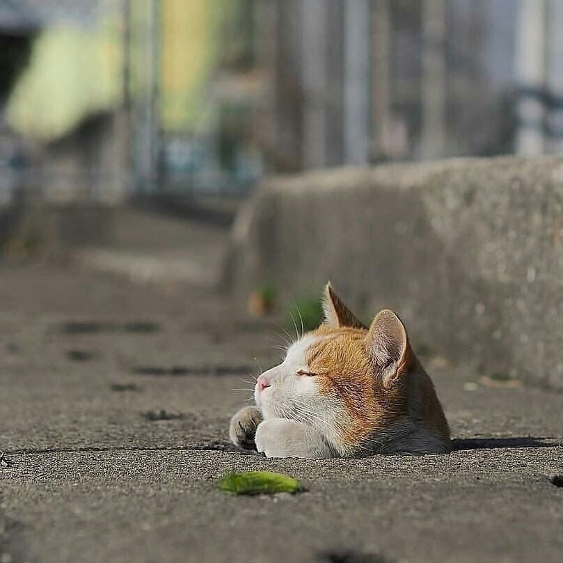 K Ae T おしゃれまとめの人気アイデア Pinterest Mita Good Qirl ペット用品 愉快な動物 おもしろい猫