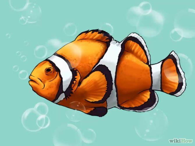 Draw A Clownfish Fish Drawings Koi Fish Drawing Drawings
