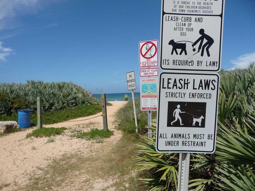 Dog Friendly Beaches In Florida Lucy Tobias Dog Friendly Beach Dog Beach Dog Friends