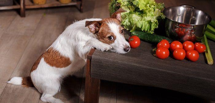 Ob eine vegetarische Ernährung für Hunde komplikationslos
