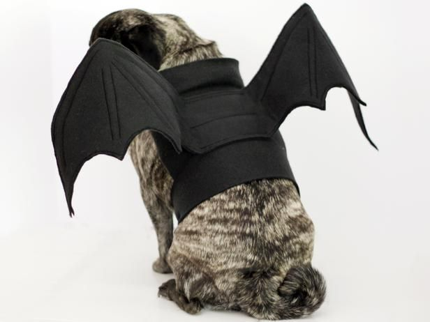 How To Make Bat Wings Halloween Costume For A Dog Diy Dog