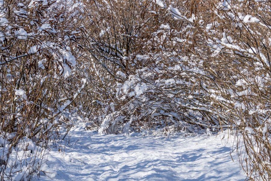 Зимний день by cikorckiy
