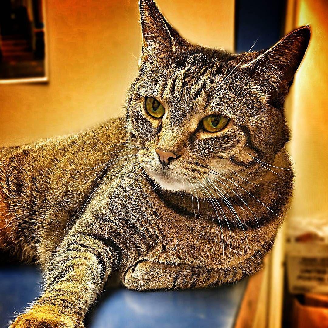 Angel H185817 Seniorcat Cat Rescue Nurture Adopt Adoptdontshop Rescuecatsofinstagram Adoptablecatsofinstagram Senior Cat Cats Of Instagram Instagram