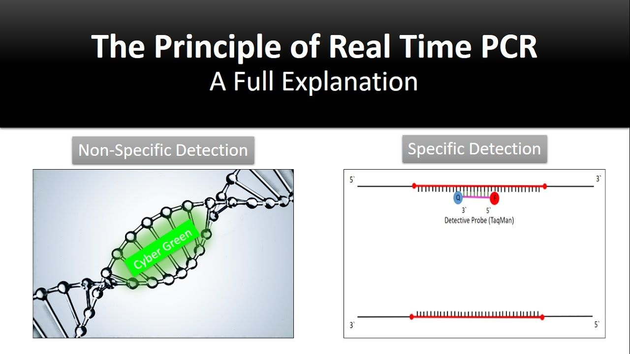 24e3aa2e24fe2b12d235e06c3654be3b - Real Time Pcr Principle And Application