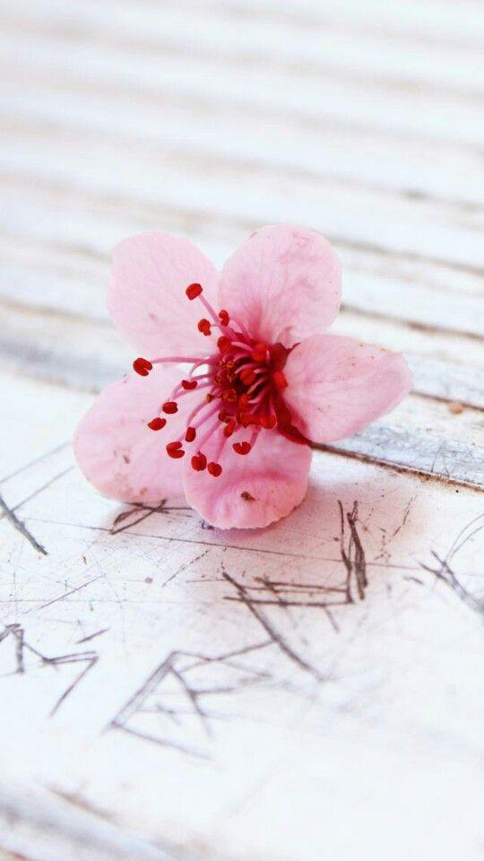 Pin by farima on nature wallpapers pinterest flower flower color splash photo by katqian mightylinksfo