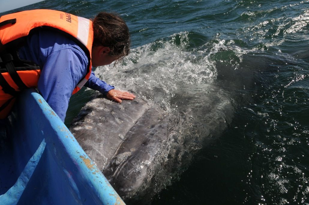 Joy and Mark investigate the reproductive secrets of marine mammals to learn how animals that breathe air manage to mate, give birth and raise their young underwater.   SEX IN THE WILD: Dolphins   Wednesday, August 6, 2014, 10:00-11:00 p.m. ET on WPBT2.
