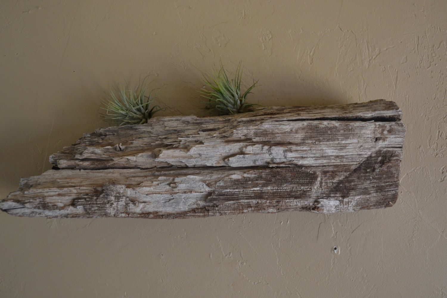 Rustic Primitive Driftwood Centerpiece Driftwood Air Plant Display