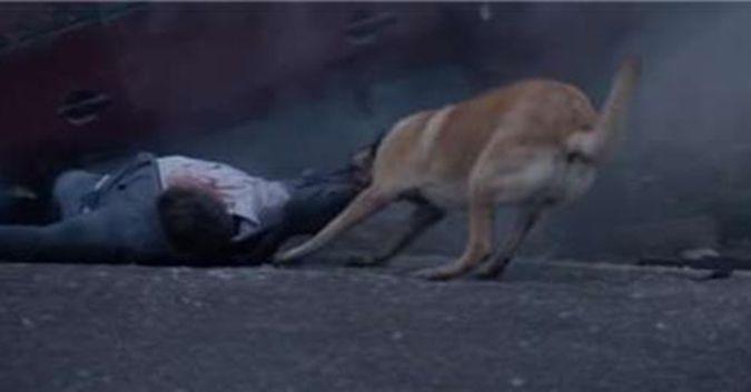 Dù bị bỏ rơi chú chó trung thành vẫn quay lại cứu chủ