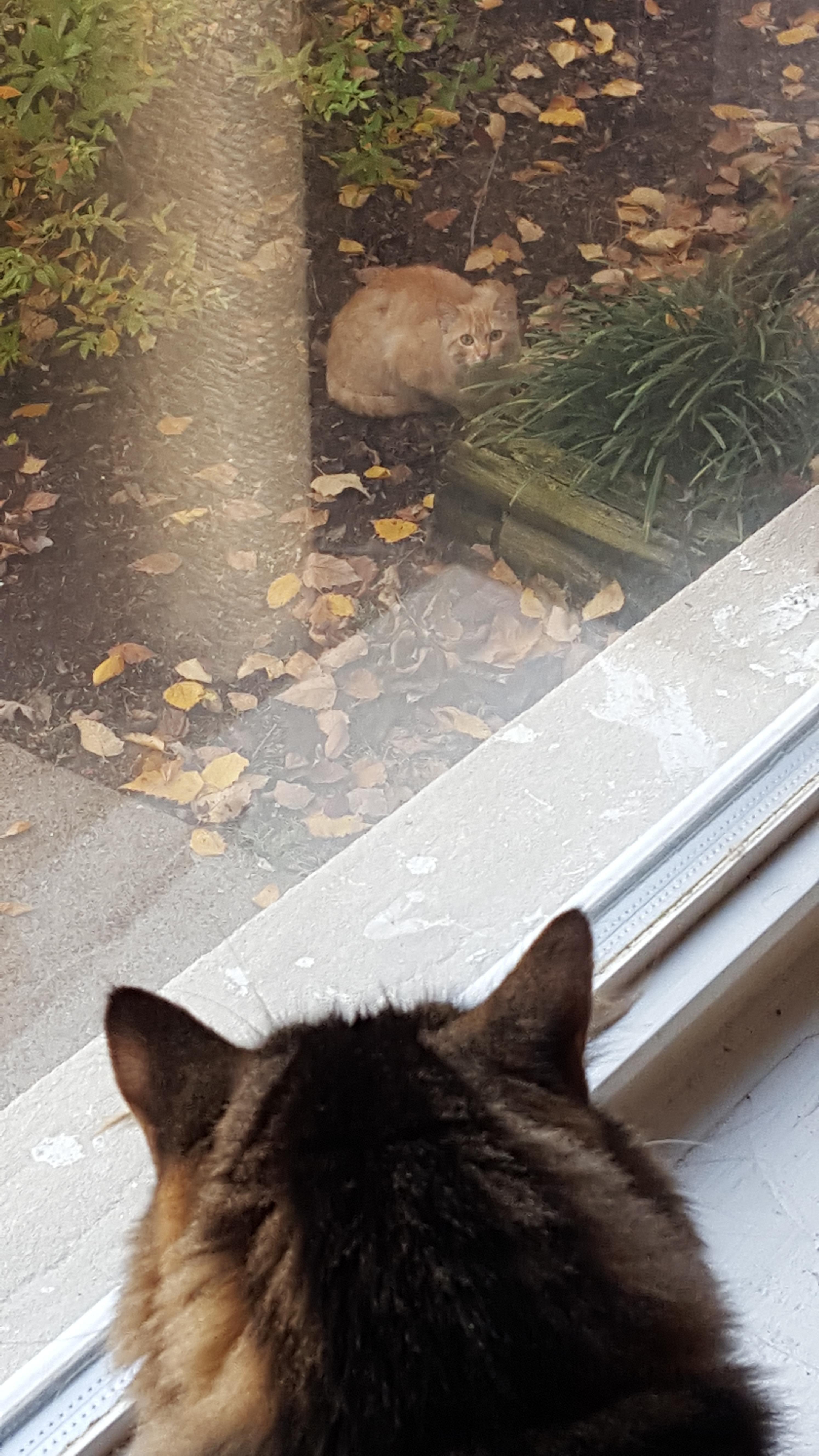 Inside Cat Saw Outside Cat Grass Is Always Greener