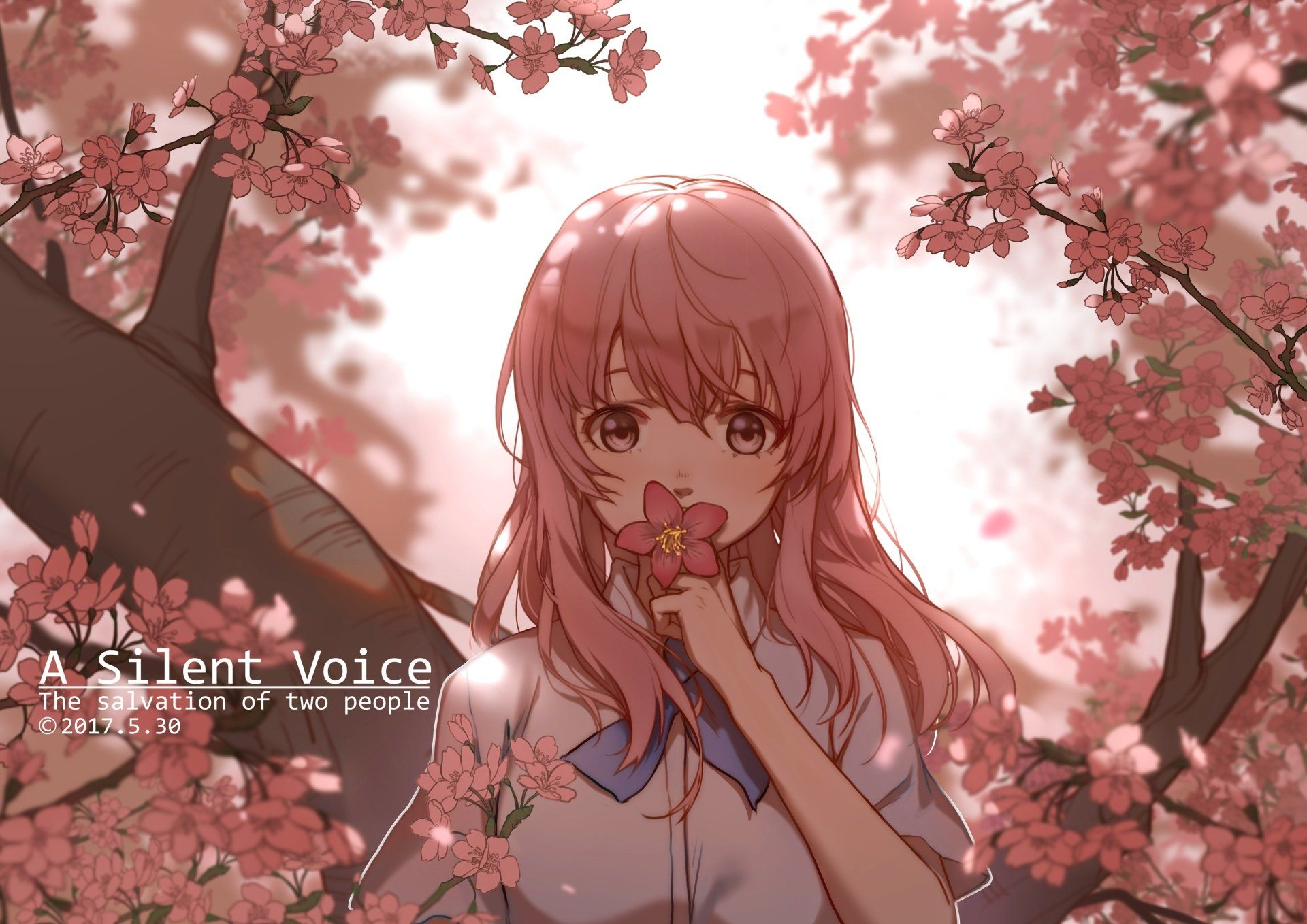 Anime Koe No Katachi Pink Hair Shouko Nishimiya Cherry Blossom Wallpaper Anime Films Anime A Silent Voice Manga