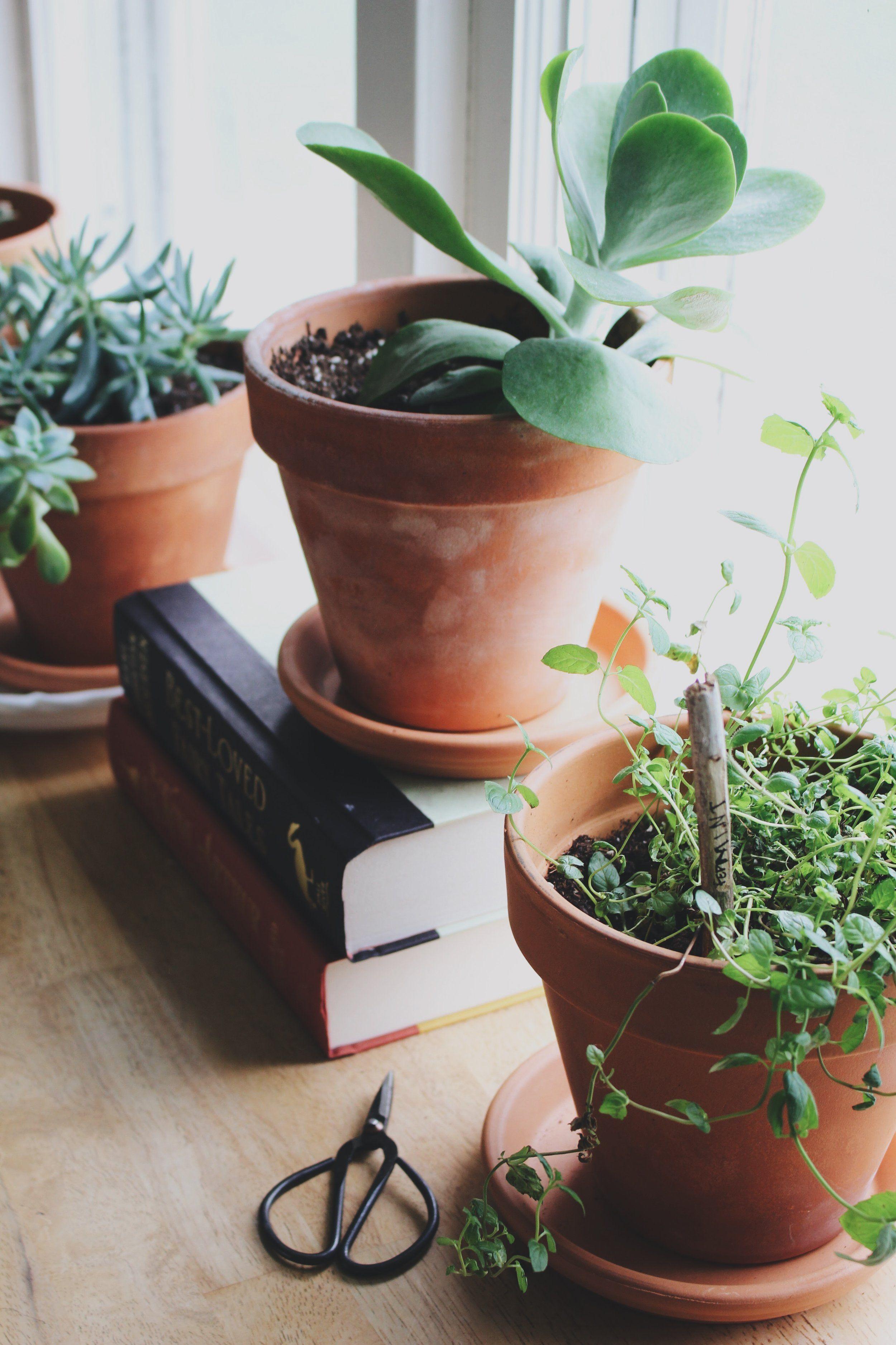 Herbal Interests // Herb Garden Update Herbalism, Herb