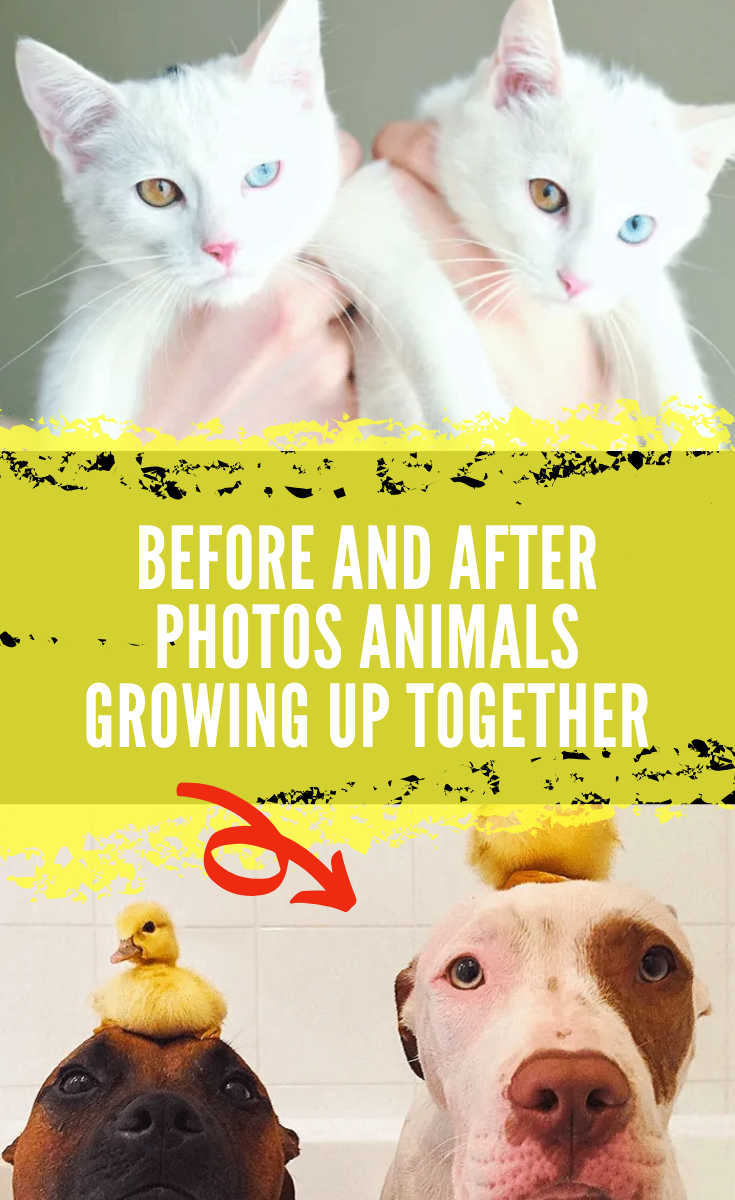 35 Photos Of Animals And Owners Growing Up Together That Prove Friendship Can Last Forever In 2020 Growing Up Animal Photo Animals