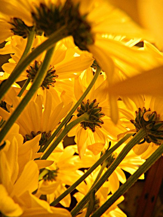 Yellow Flowers Perspective Looking Up by GladyAnnePhotography, $25.00