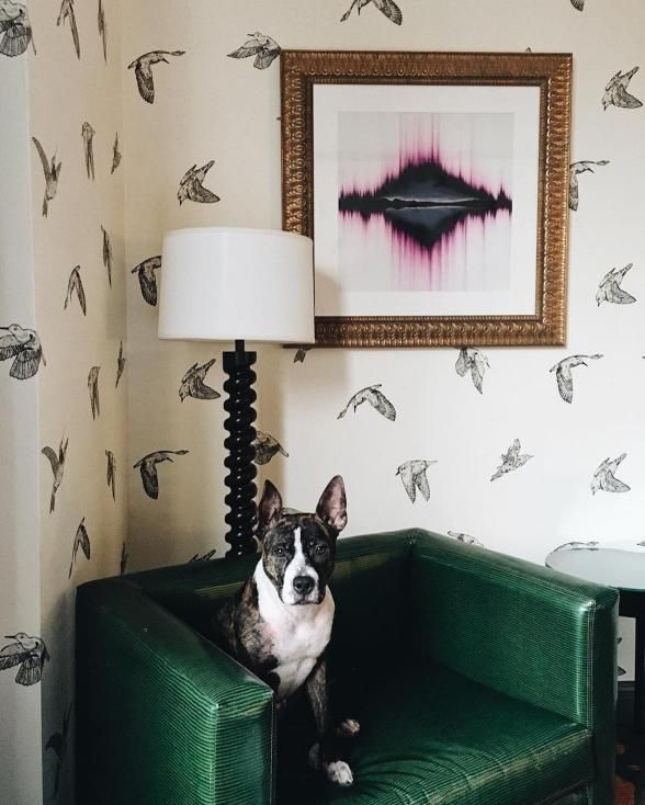 20 Pet Friendly Accommodations That Will Change How You Travel