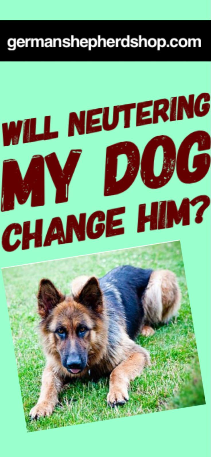 Will Neutering My Dog Change Him German Shepherd Training Dog